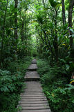 Walkway through Hawaii forest. Made of wooden planks Stock Photo