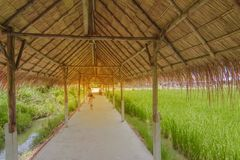 Walkway with hay roof, Folk roofing products from grass in Thailand. For background stock photography