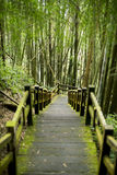 Walkway of hiking trail near bamboo forest Royalty Free Stock Image