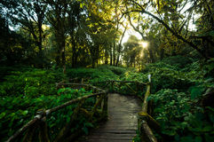 Walkway in the hill evergreen forest Royalty Free Stock Image