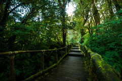 Walkway in the hill evergreen forest Royalty Free Stock Photography