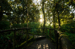 Walkway in the hill evergreen forest Royalty Free Stock Photo