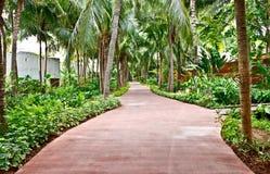 Walkway i den tropiska trädgården 3 arkivbilder