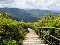 Walkway i den Tung Bua tongen (den mexicanska solrosen) Arkivfoton