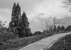 Walkway i skog Arkivfoto