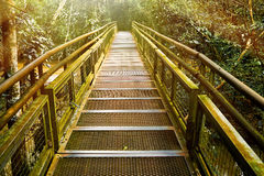 Walkway into jungle Jungle rainforest,tropic forest with fern an stock photo