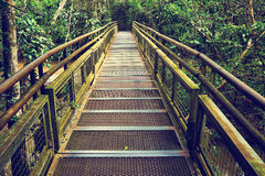 Walkway into jungle Jungle rainforest,tropic forest with fern an Royalty Free Stock Photography