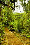 Walkway through the jungle. Path through the Jungle in Costa Ricas rain forest Royalty Free Stock Photo