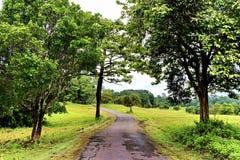Walkway at Kao Yai National Park, THailand Royalty Free Stock Photo