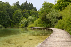 Walkway at the lake. Wooden walkway crossing a lake in summer royalty free stock images