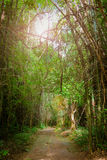 Walkway lane path in the forest Royalty Free Stock Photo