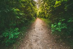 Walkway Lane Path With Green Bushes In Garden. Beautiful Alley I royalty free stock images