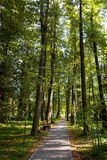 Walkway Lane Path With Green Trees in Forest. Stock Photo