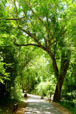 Walkway Lane Path With Green Trees Stock Images