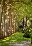 Walkway Lane Path With Green Trees in Forest. Beautiful Alley In Park. royalty free stock photography