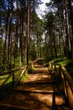 Path With Green Trees in Forest Royalty Free Stock Photo