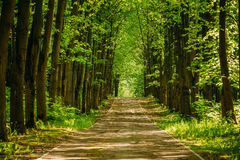 Walkway Lane Path With Green Trees in Forest. Pathway Way Through Stock Photos