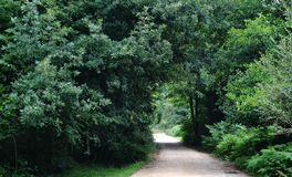 Walkway lane path with green trees in forest. Road in park. Lonely way through spring forest stock photography