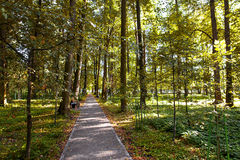 Walkway Lane Path With Green Trees in Forest.  Russia, Stock Photos