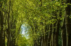 Walkway, lane, path with green trees in the forest.  royalty free stock photo
