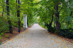 Walkway Lane Path With Green Trees in park. Walkway Lane Path With Green Trees in Forest. Beautiful Alley In Park. Pathway Way Through Dark Forest Royalty Free Stock Photo