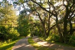 Walkway Among Large Oak Trees Royalty Free Stock Photo