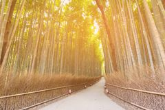 Walkway leading in to Bamboo forest Kyoto Japan Stock Photos