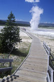 Walkway Leading to Geyser, Yellowstone National Park, Wyoming Royalty Free Stock Photo