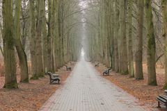 Walkway of lime trees in the botanical garden in Minsk Royalty Free Stock Photo