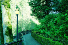 Walkway. Lush green trees and walkway Royalty Free Stock Photos