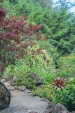 Walkway Through a Lush Paradise Royalty Free Stock Images