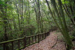 Walkway in a lush and verdant forest on Jeju Island Stock Images
