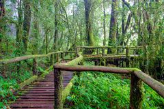 The walkway is made from a wooden bridge has handrails used walked. Into the tropical rain forest Royalty Free Stock Image