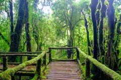 The walkway is made from a wooden bridge has handrails used walked. Into the tropical rain forest Royalty Free Stock Images