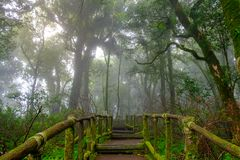 The walkway is made from a wooden bridge has handrails. Used walked into the tropical rain forest Stock Photo