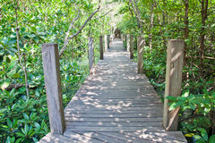 Walkway in mangrove forest Stock Photos