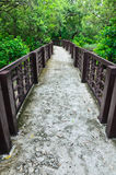 Walkway in mangrove forest Royalty Free Stock Photo