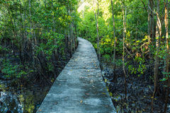 Walkway in the mangrove forest Stock Photo