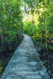 Walkway in the mangrove forest Stock Images