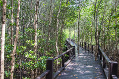 Walkway on the mangrove forest at Pranburi nation park,Thailand stock photos