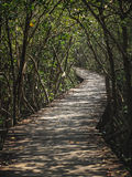 Walkway in mangrove forest Stock Photo