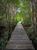 Walkway in mangrove forest Stock Images
