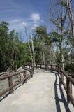Walkway between mangrove at Tua Pek Kong Temple, Sitiawan, Malaysia Royalty Free Stock Photography