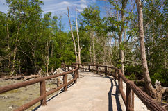 Walkway between mangrove at Tua Pek Kong Temple, Sitiawan, Malaysia Stock Photo