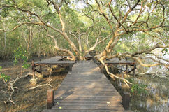 Walkway through mangroves forest Stock Photo