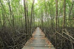 Walkway through mangroves forest Stock Photos