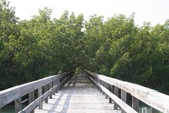 Walkway through the mangroves Royalty Free Stock Photo
