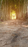 Walkway in middle of bamboo tree Stock Photo