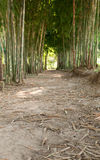 Walkway in middle of bamboo tree Stock Photos