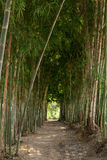 Walkway in middle of bamboo tree Royalty Free Stock Photography